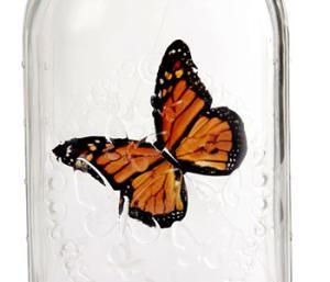 Банка для сыпучих продуктов бабочки